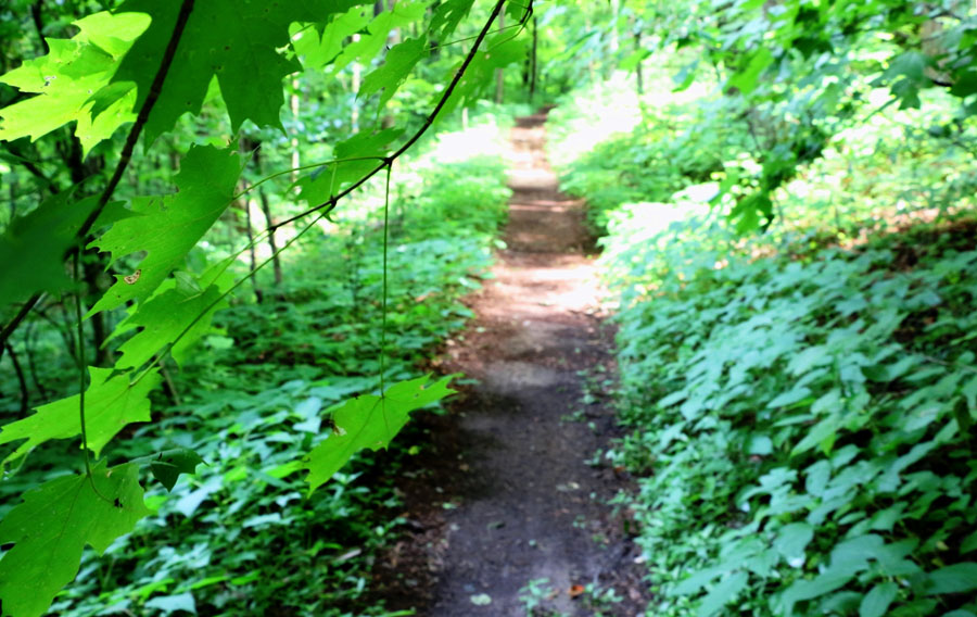 WHNP_Leaf-framed_Trail_IMG_2270