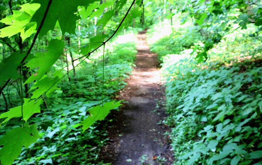 WHNP_Leaf-framed_Trail_IMG_2270