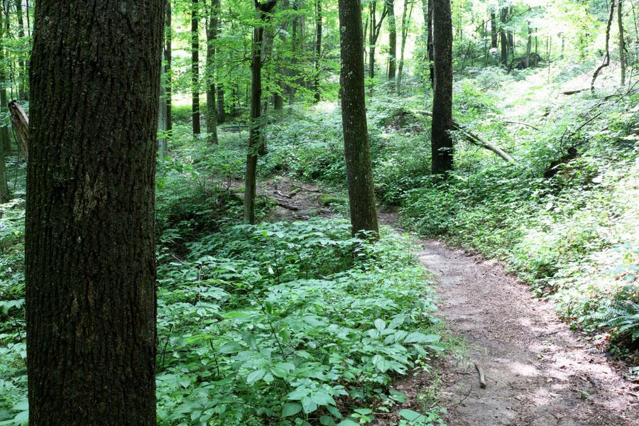 WHNP_Trail&Trees_2014.07.14_IMG_2248