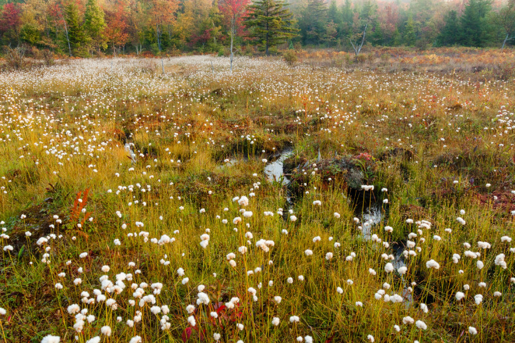 05D-34  HIGHLAND BOGS AND WETLANDS, WV  © KENT MASON