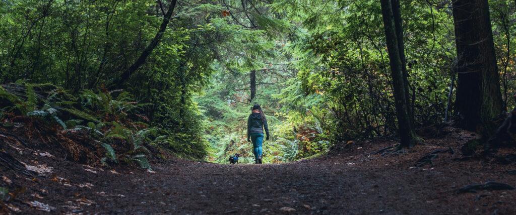 WVLT-woods-hiking_web